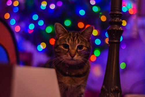 Cat Feline Kitten Kitty Pet - Free Photo 1