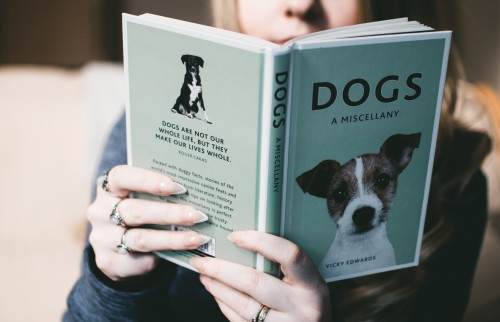 Terrier Hand Dog Business Portrait Hunting dog Book Person Finance - Free Photo
