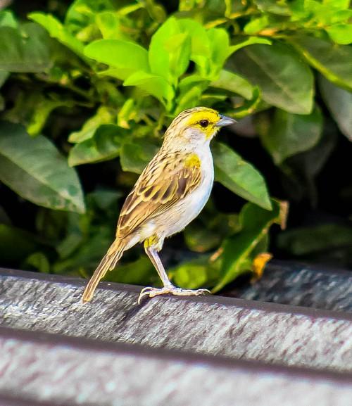 Bird Wildlife Beak Wild Feather Wing Sparrow Tree #1
