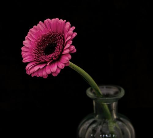 Pink Flower Vase Plant Blossom Flowers - Free Photo 1