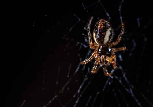 Spider Arachnid Garden spider Arthropod Web Spider web - Free Photo 1