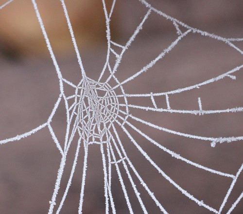 Web Spider web Cobweb Spider Trap Light Pattern Design Texture - Free Photo 1