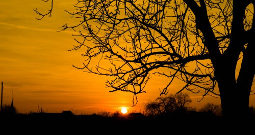 Sun Star Celestial body Tree Sky Sunset - Free Photo