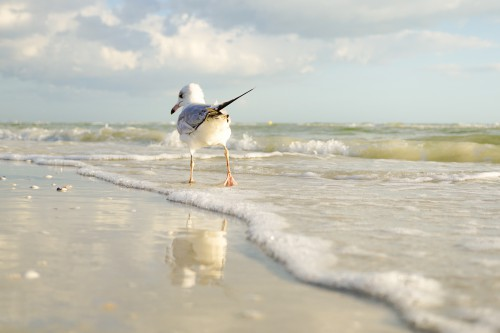 Bird Sandpiper Water Sea Beach Shorebird Ocean Gull Sky - Free Photo 1