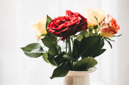 Bouquet Flower arrangement Arrangement Decoration Flower Petal Gift Plant - Free Photo