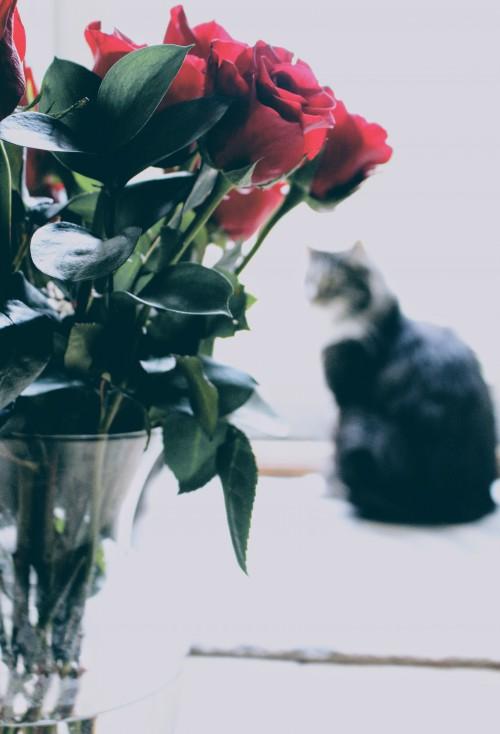 Vase Jar Bouquet Flower Vessel Flowers Container Plant - Free Photo 1