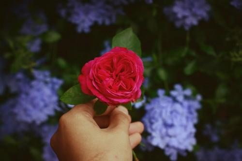 Rose Bouquet Flower arrangement Roses Arrangement Flower Petal Decoration Love Shrub - Free Photo 1