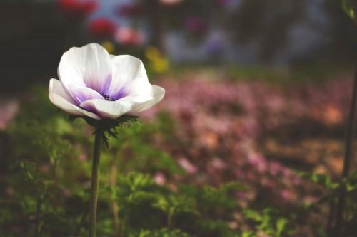Flower Plant Pink Petal Vascular plant Mallow Garden Blossom Flowers - Free Photo
