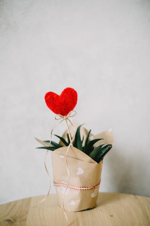Vase Bud Flower Petal Jar Rose Vessel Plant Container Love - Free Photo