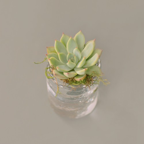 Container Cup Vase Plant Flower Pot Glass Spring Fresh - Free Photo 1