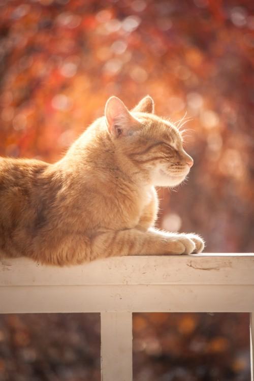 Feline Cat Kitty Kitten Fur Pet Domestic Whiskers Cute Lynx #1