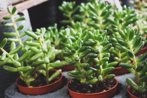 Vegetable Food Herb Fresh Cress Healthy Diet Vegetables Plant Salad - Free Photo 1