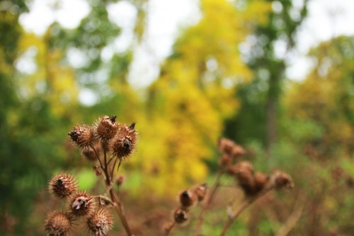Plant Tree Vascular plant Woody plant Flower Close #1