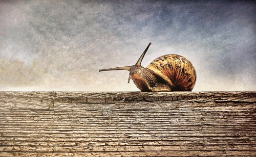 Snail Gastropod Mollusk Invertebrate Animal - Free Photo 1