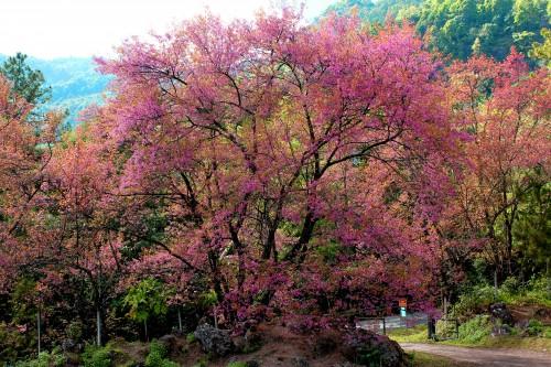 Shrub Plant Tree Autumn Season Colorful #1