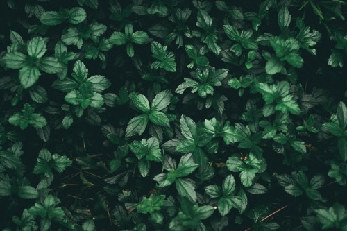 Plant Herb Leaf Tree Foliage Garden Fern Growth Natural - Free Photo 1
