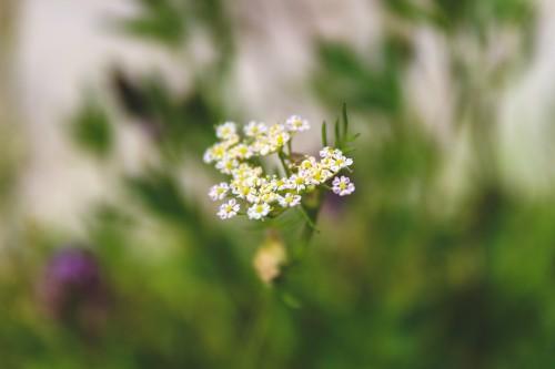 Herb Plant Flower Blossom Spring - Free Photo 1