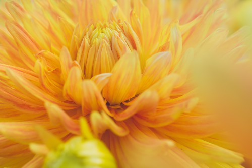 Petal Flower Plant Yellow Color Invertebrate - Free Photo 1