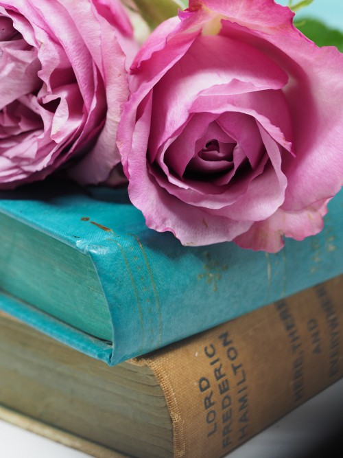 Rose Flower Petal Velvet Valentine Fabric Love Satin Pink Plant - Free Photo 1