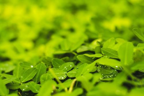 Plant Vascular plant Aquatic plant Leaf Growth - Free Photo 1
