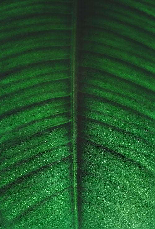 Texture Pattern Light Greenery Plant - Free Photo 1