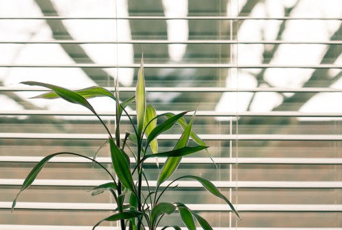 Window shade Protective covering Plant Window blind Window screen Blind Screen Leaf Covering Agave - Free Photo 1