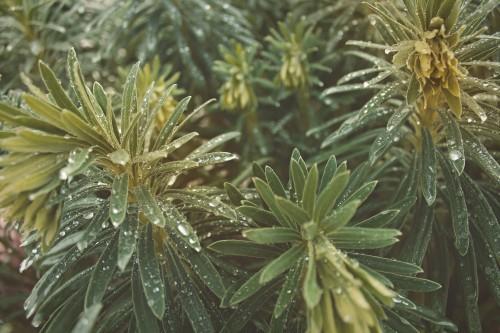 Tree Vascular plant Plant Woody plant Agave Shrub Cactus #1