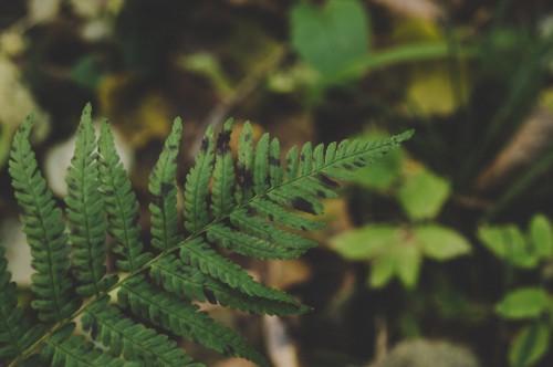 Fern Plant Forest Tree Flora Leaf Branch - Free Photo 1