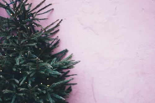 Plant Frame Texture Tree Grunge Decoration Amaranth Design Herb Art - Free Photo 1