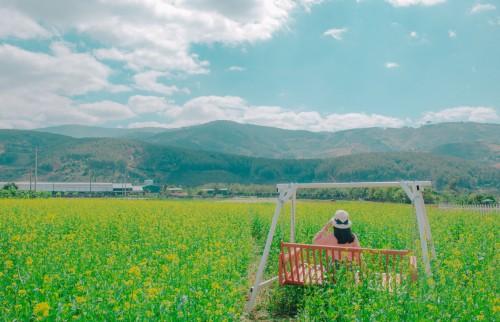 Rapeseed Oilseed Seed Field Landscape Rural Grass Sky Meadow Fruit - Free Photo 1