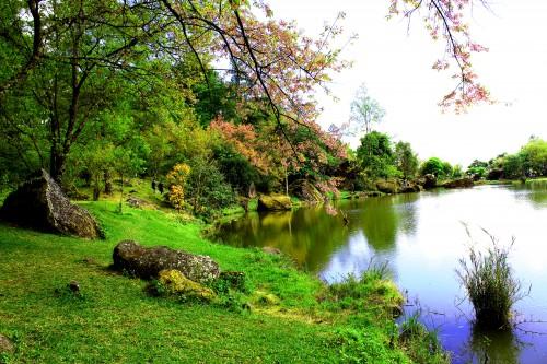 Tree Forest Plant Landscape Aquatic Park Grass #1