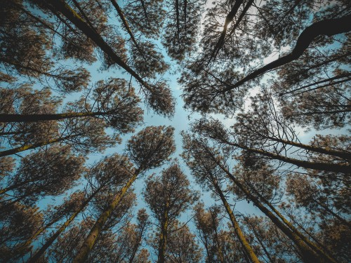 Tree Woody plant Forest Vascular plant Silver tree Trees Landscape - Free Photo 1