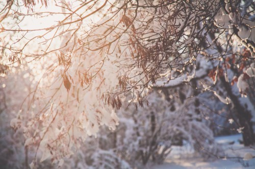 Snow Weather Tree Winter Ice Frost Forest Cold - Free Photo 1