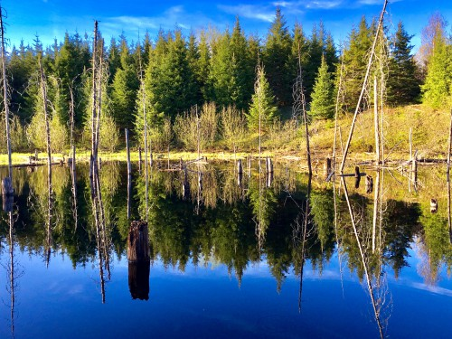 Tree Poplar Forest Landscape Lake Trees Water Birch Park Reflection - Free Photo 1