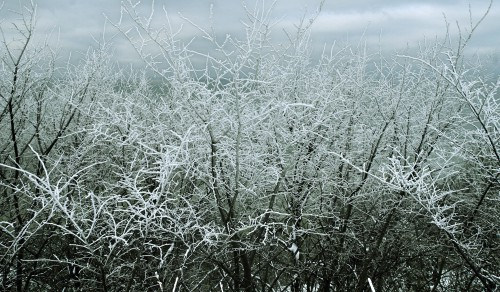 Spider web Web Cobweb Trap Tree Winter Snow - Free Photo 1