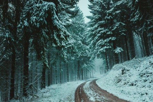 Snow Weather Winter Ice Cold Tree Forest Landscape Trees - Free Photo 1