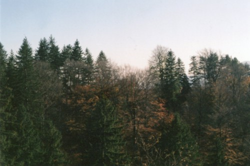 Tree Landscape Forest Fir Trees - Free Photo 1