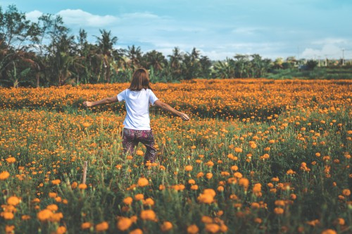 Flower Poppy Farmer Pumpkin Field Sky Landscape Summer Sunflower #1