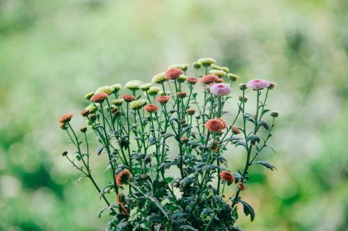 Flower Fruit Plant Hip Field Poppy Summer - Free Photo 1