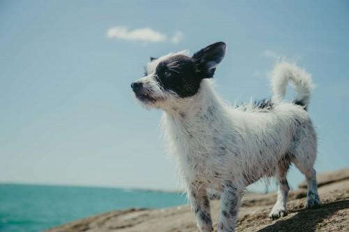Dog Canine Cardigan Corgi Pet Terrier Cute - Free Photo 1