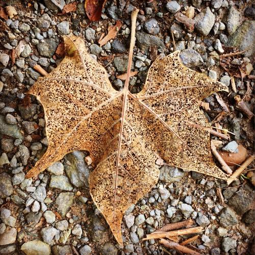 Invertebrate Starfish Echinoderm Animal Texture Rough - Free Photo 1